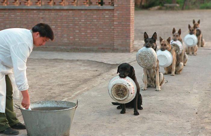 Cina, in fila per la cena come soldati: ma sono cani poliziotto FOTO