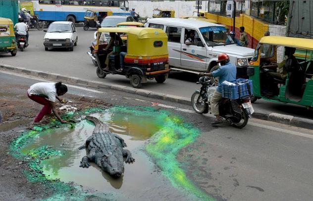 """India, buca stradale """"riparata"""" col coccordillo. Pensa se lo facessero a Roma"""