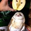 La mela-gufo, il kiwi-Batman, la fragola-farfalla: l'ortofrutta più strana in 22 FOTO
