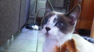 Olanda: macchinista ferma il treno per salvare gatta incastrata sui binari