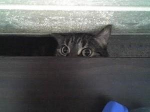 Gatti, gli atteggiamenti da tenere sott'occhio: se ha uno di questi...