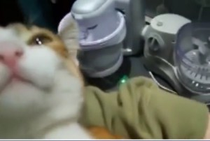 """Il gatto - pappagallo che miagolando dice """"mamma"""""""