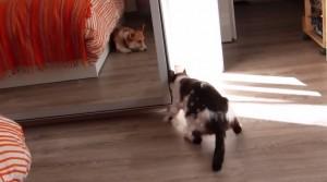 Gatto cerca privacy: apre l'armadio entra e chiude l'anta