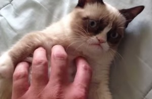 VIDEO YouTube - Guardare filmati di gatti fa bene alla salute: ecco perché