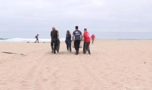 Cuccioli di leoni marini abbandonati su costa California: volontari li ributtano in mare