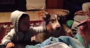 """cane affamato dice """"mamma"""" prima del bimbo, lui non la prende molto bene"""