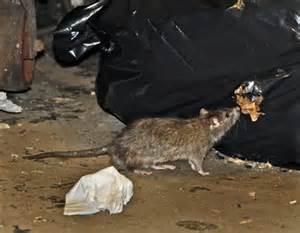 Topi e spazzatura nella metro di New York