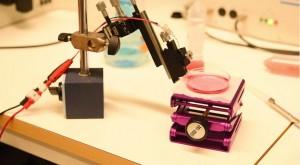 Neuroni artificiali in plastica conduttiva: impulsi elettrici come nei veri
