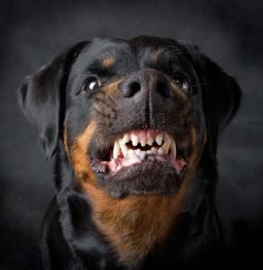 Isernia, rottweiler sbrana cane da tartufo e padrone lo uccide con accetta