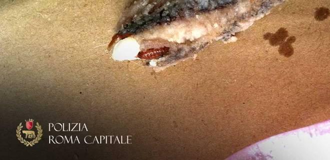 Roma: frittura di pesce con larve e blatte, chiuso ristorante al Pigneto