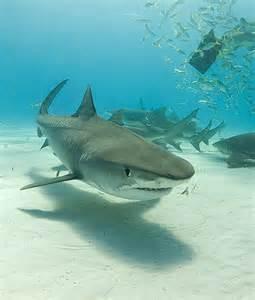 Florida, bambino di dieci anni aggredito da squalo