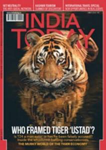 """India. Tigre Ustad rinchiusa in zoo: """"Ucciso un uomo"""". Animalisti: """"Liberatela"""""""