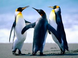 """Casalnoceto, """"pinguini in frigo prima dello show"""": accuse al circo Colber"""