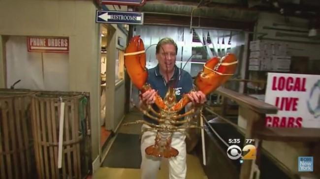 New York, aragosta di 95 anni in un ristorante di New York: pesa 20 chili FOTO