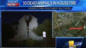 VIDEO YouTube. Baltimora. Spengono incendio in casa: ci trovano 30 animali morti