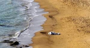 Badante russa trovata cadavere sulla spiaggia a Milano Marittima: forse annegata