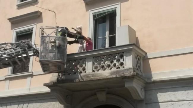 Milano, cane Labrador chiuso da 3 giorni sul balcone sotto al sole