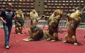 Leoni in un circo