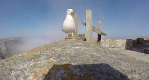 Spagna, gabbiano ruba GoPro e riprende dall'alto le Isole Cies