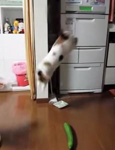 VIDEO YouTube: il gatto terrorizzato da un cetriolo