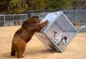 Donna dentro cubo viene attaccata da orso: lei riprende tutto