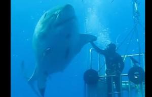 Eugenio Masala morso da squalo quando era già morto. Forse la muta...