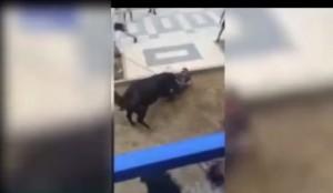 VIDEO YouTube. Toro uccide uomo in Spagna: incornato e trascinato in strada
