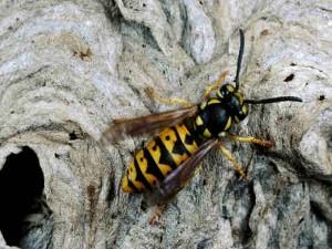 Mariano Zen, punto sul labbro da vespa: morto durante passeggiata in bici