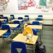 Bubba, gatto va a scuola: ora ha anche il tesserino7