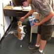 Bubba, gatto va a scuola: ora ha anche il tesserino5