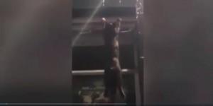 Video Youtube: gatto appeso a finestra, lo salvano passanti