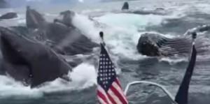 branco di balene emerge dall'oceano, paura ed emozione a bordo della barca