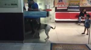 VIDEO - Cane aspetta fuori dall'ospedale la padrona morta