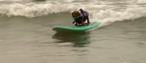 In California, anche i cani fanno surf