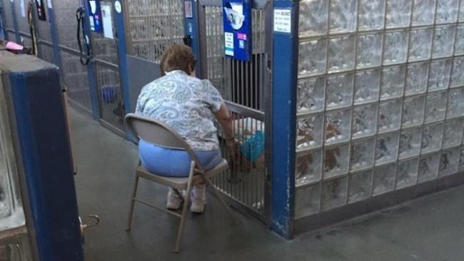 """Usa, legge libri agli animali dei canili: """"Così si sentono meno soli"""""""