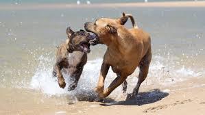 In spiaggia con il cane: Tar del Lazio dice sì