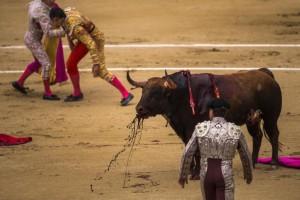 Spagna, Podemos abolisce la corrida: da Saragozza a Valencia tori salvi