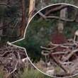 "Video Youtube - ""Fantasma nel bosco"": foto fake o realtà?"