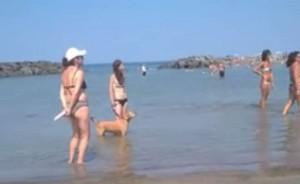 VIDEO YouTube, Fiumicino: insulti a ragazza al mare col cane