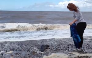 VIDEO YouTube, cucciolo di foca spiaggiato salvato da una coppia di ragazzi