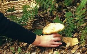 Rocca di Mezzo. Mangiano funghi velenosi: in 5 in ospedale
