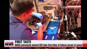 VIDEO YouTube - Lattuga spaziale, primo assaggio in orbita