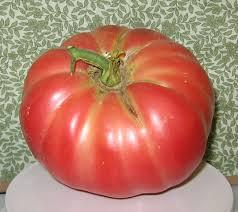 Pomodoro gigante da 3,5 kg: Angelo Squillante da record