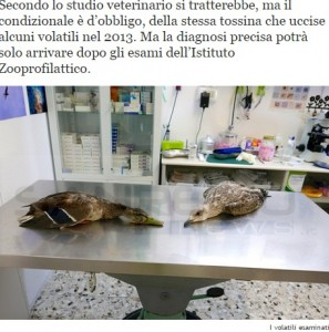 Riva Ligure, uccelli morti: forse uccisi da tossina botulinica