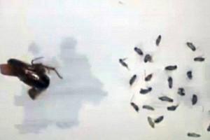 VIDEO YouTube, Cina: mal d'orecchi, dentro 26 scarafaggi