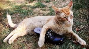 Snorri, il gatto cleptomane
