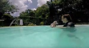 170 euro per nuotare con le baby tigri