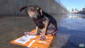 VIDEO YouTube. Cane picchiato e abbandonato viene salvato