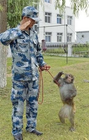 Cina, parata militare: presente anche il commando scimmie