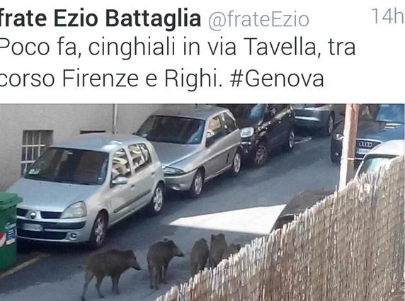 Cinghiali in strada a Genova FOTO Twitter